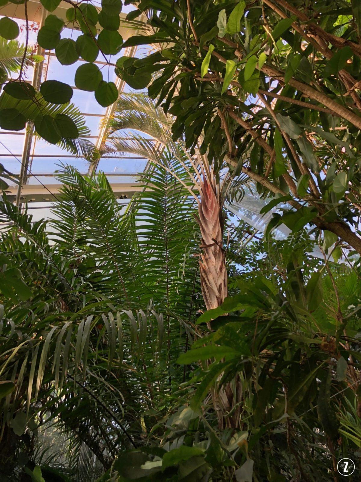 palmiarnia wPoznaniu