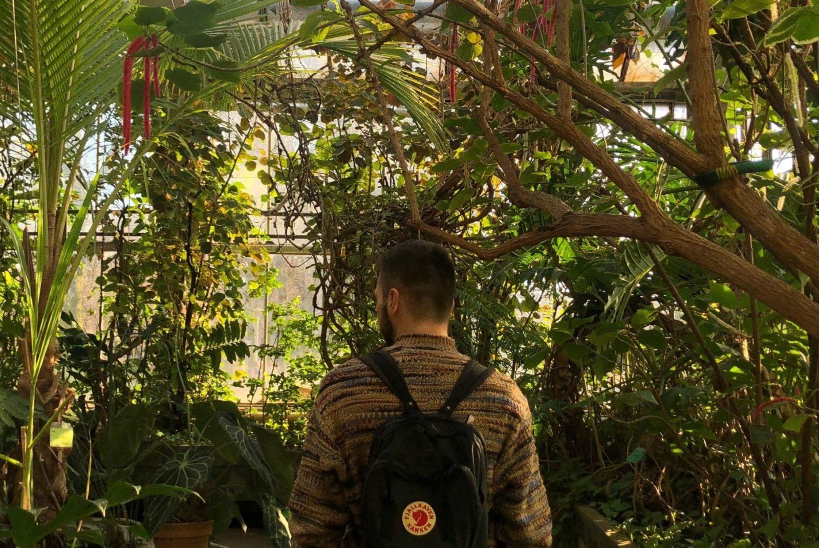 palmiarnia w poznaniu