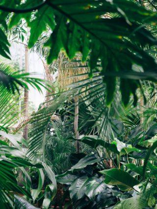 palmiarnia wwałbrzychu