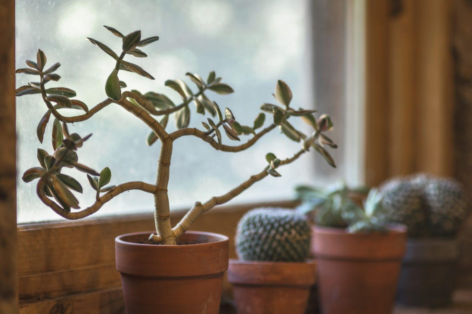 pierwsza roślina