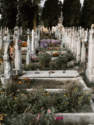 kwiaty nawszystkich świętych