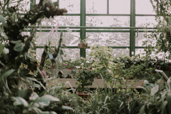 kwiaty kwitnące zimą, blog, zazieleni, pielęgnacja roślin, pielęgnacja kwiatów zimą
