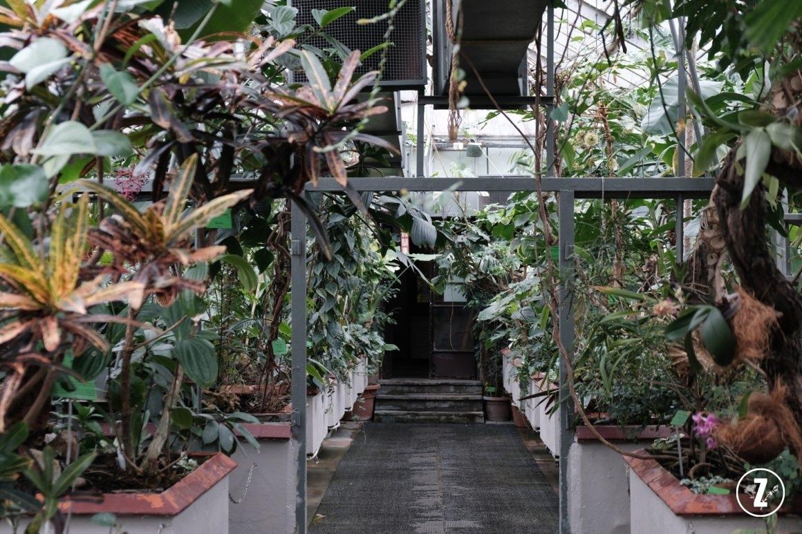 Ogród Botaniczny Uniwersytetu Wrocławskiego, Ogród Botaniczny weWrocławiu