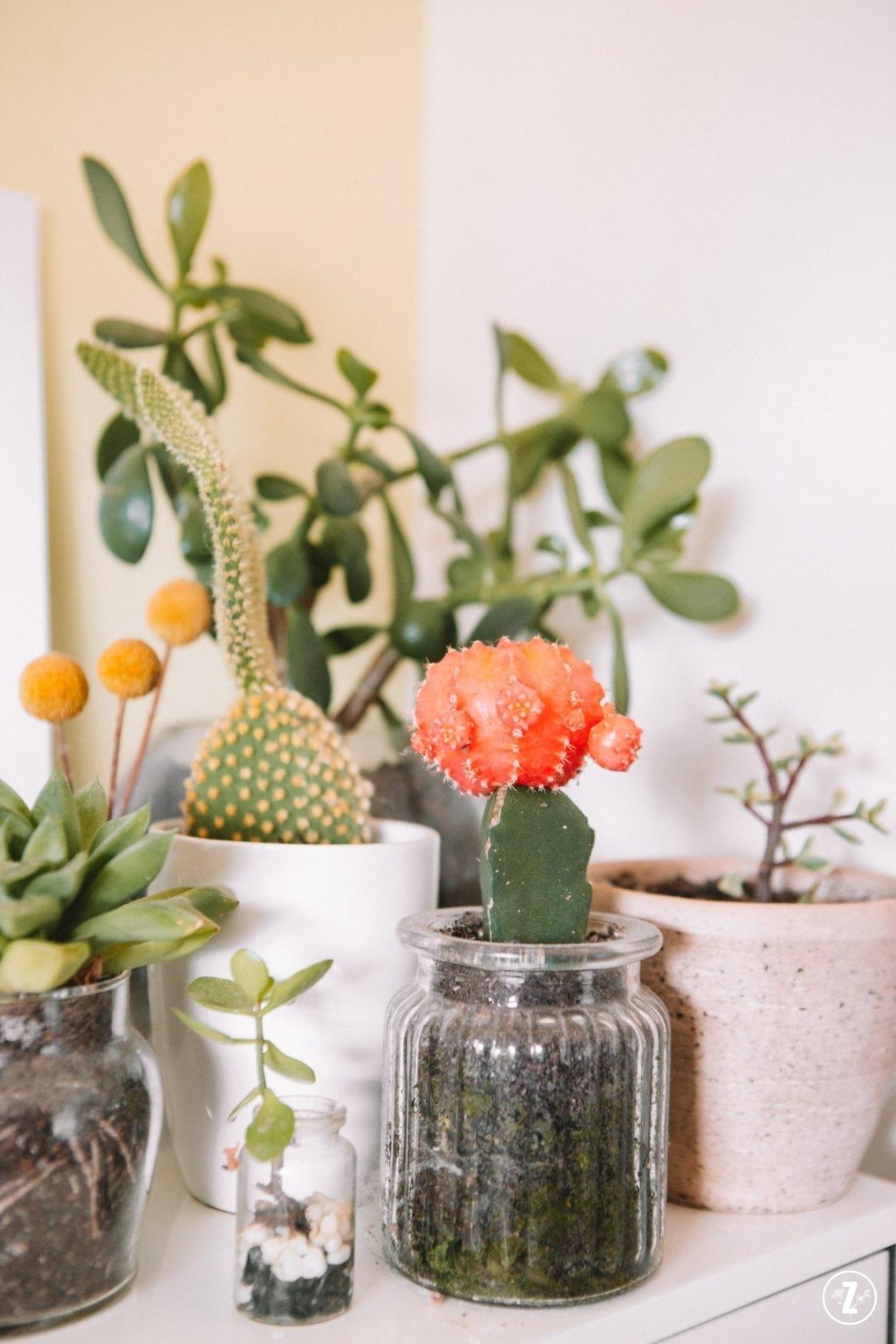 kalendarz zazieleni, kaktusy