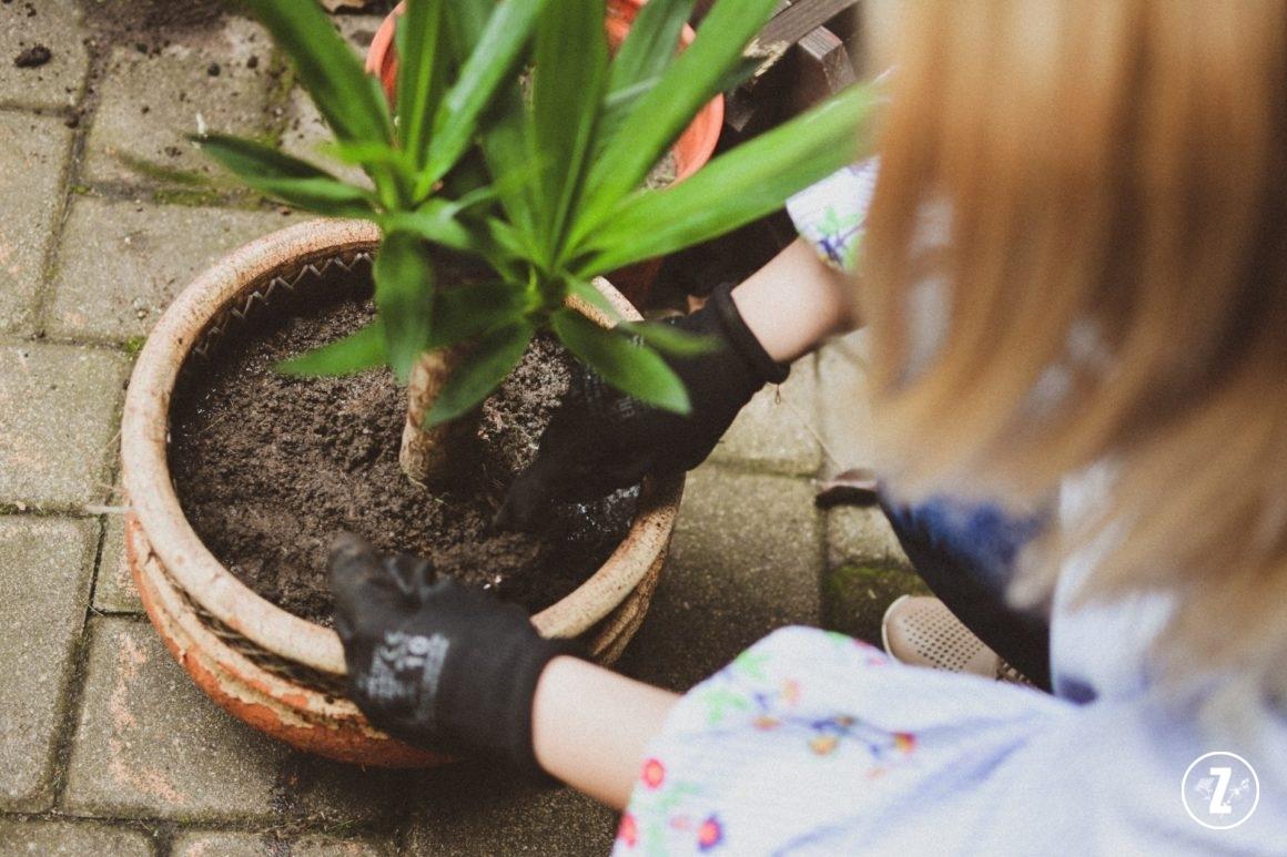 przesadzanie roślin, kalendarz zazieleni