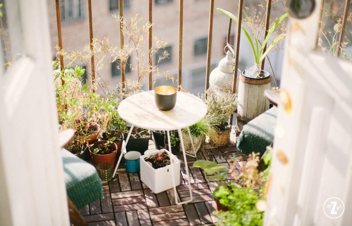 rośliny nabalkonie, rośliny balkonowe