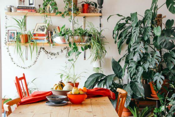 kalendarz Zazieleni, rośliny w jadalni