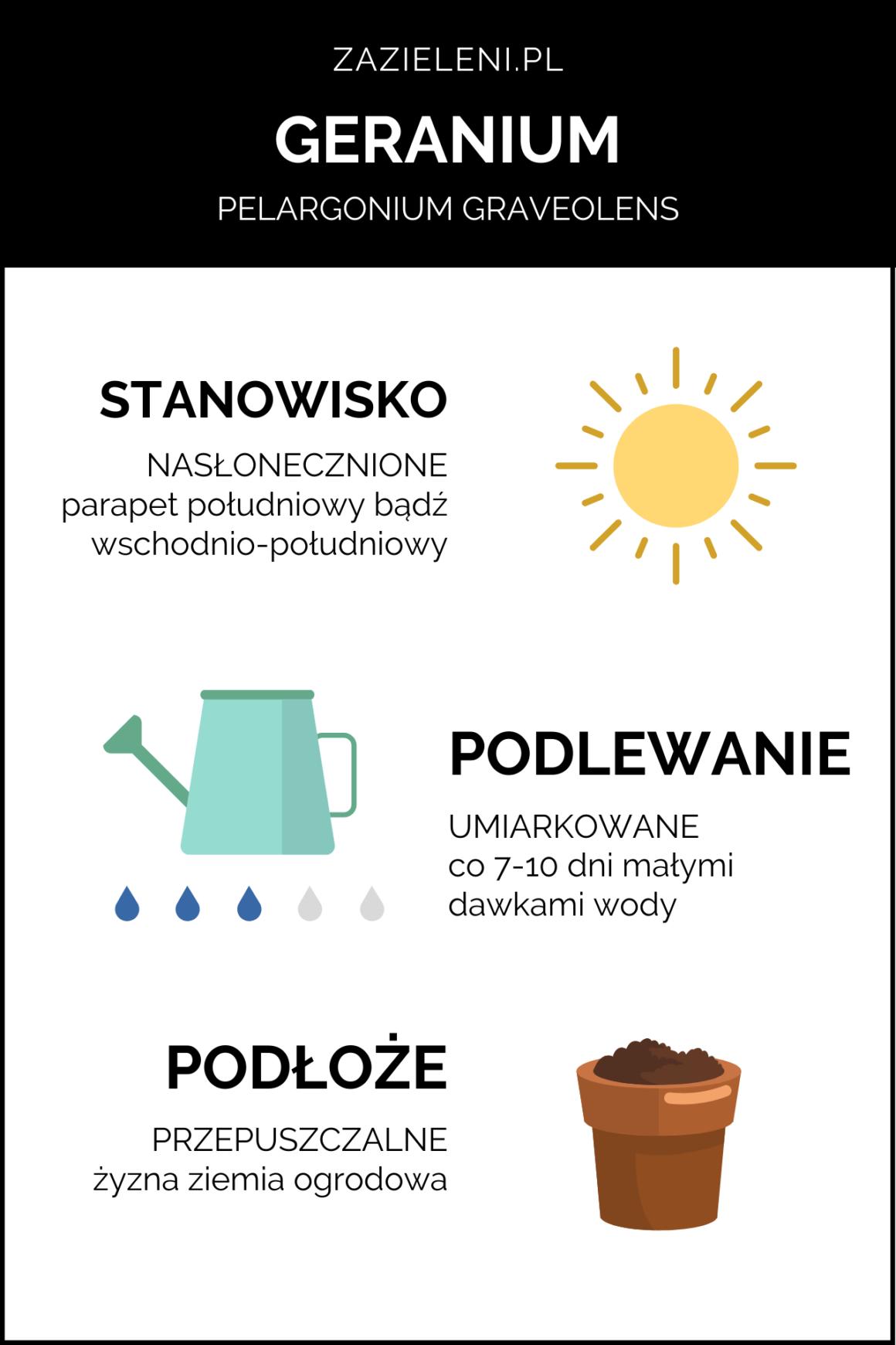 infografika geranium, wskrócie oroślinach, blog, zazieleni