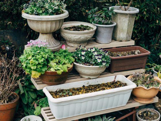 jaka doniczka dla mojej rośliny?