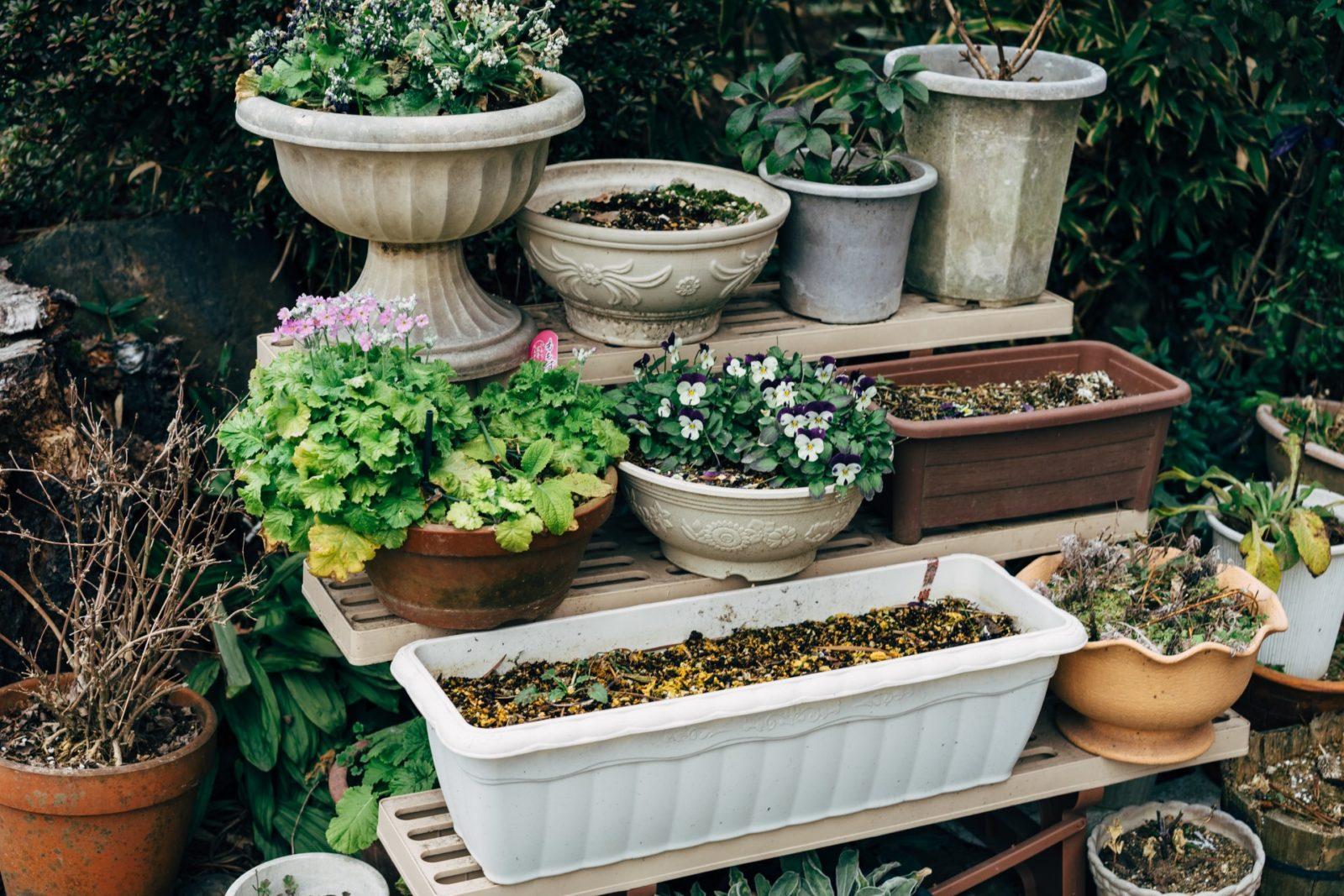 jaka doniczka dla mojejrośliny?