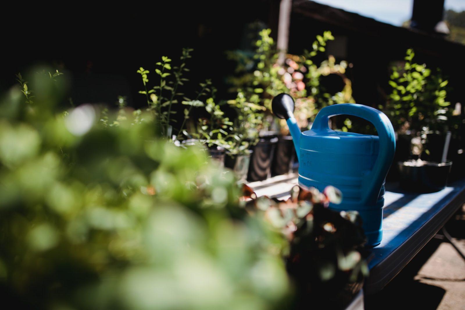 jak podlewać rośliny doniczkowe? podlewanie roślin doniczkowych