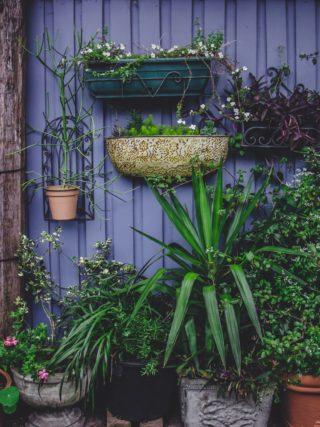 rośliny nabalkonie