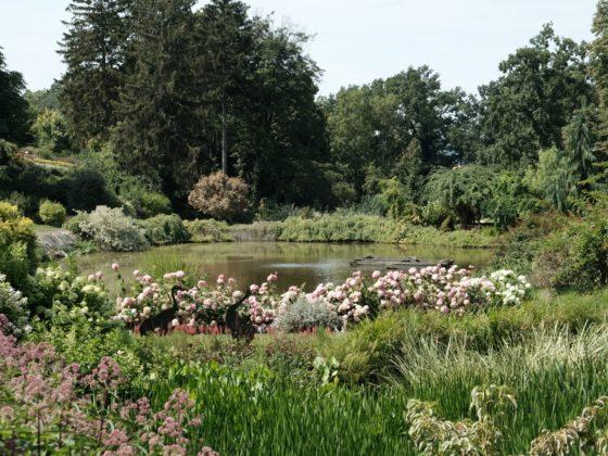 Arboretum Wojsławice, Arboretum w Wojsławicach