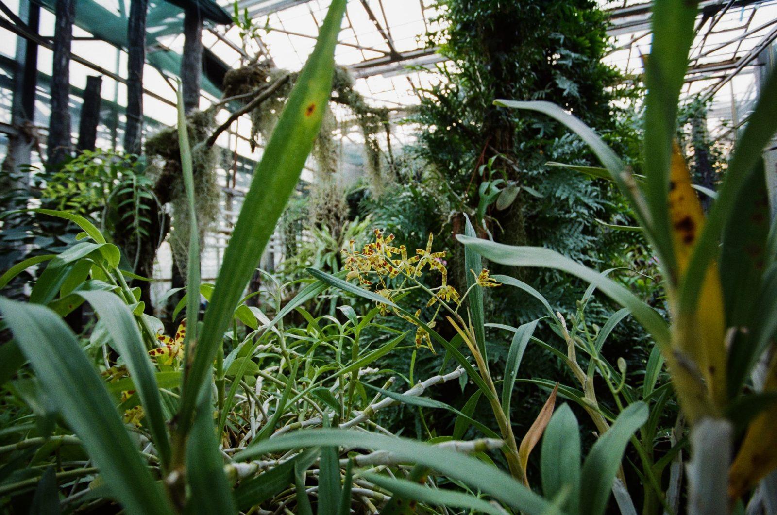 choroby grzybowe roślin