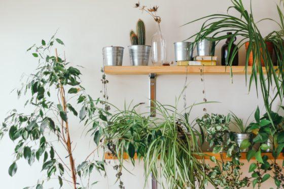 problemy w uprawie roślin doniczkowych i ich przyczyny