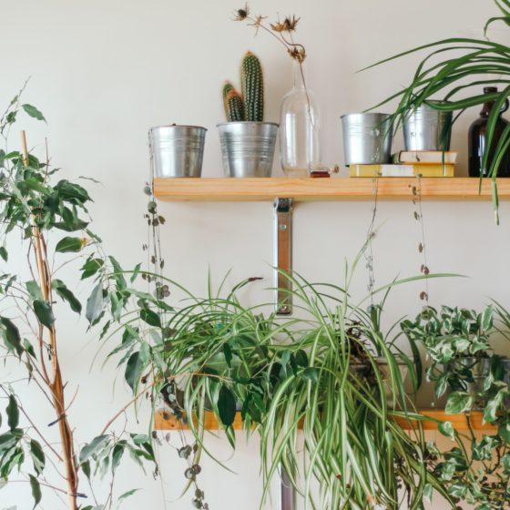 problemy wuprawie roślin doniczkowych iich przyczyny
