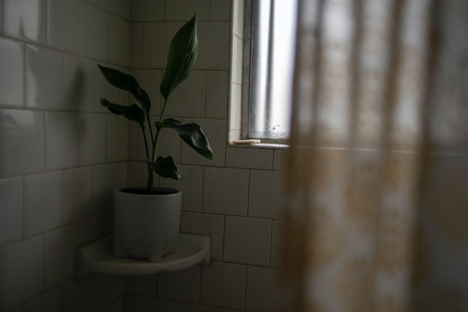 jakie rośliny do łazienki