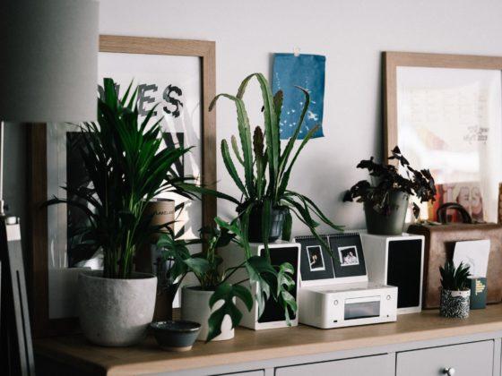 retro rośliny do wnętrz, retro roślina, vintage
