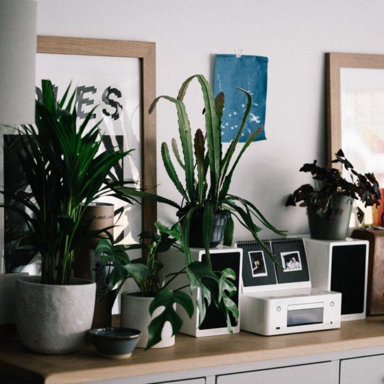 retro rośliny downętrz, retro roślina, vintage