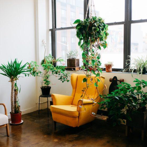 Stanowisko dla roślin doniczkowych, jakie wybrać stanowisko dla roślin