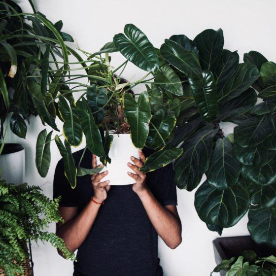 cieniolubne kwiaty, cieniolubne rośliny