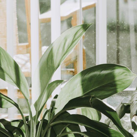 kupowanie roślin doniczkowych zimą, jak zabezpieczyć rośliny wtransporcie
