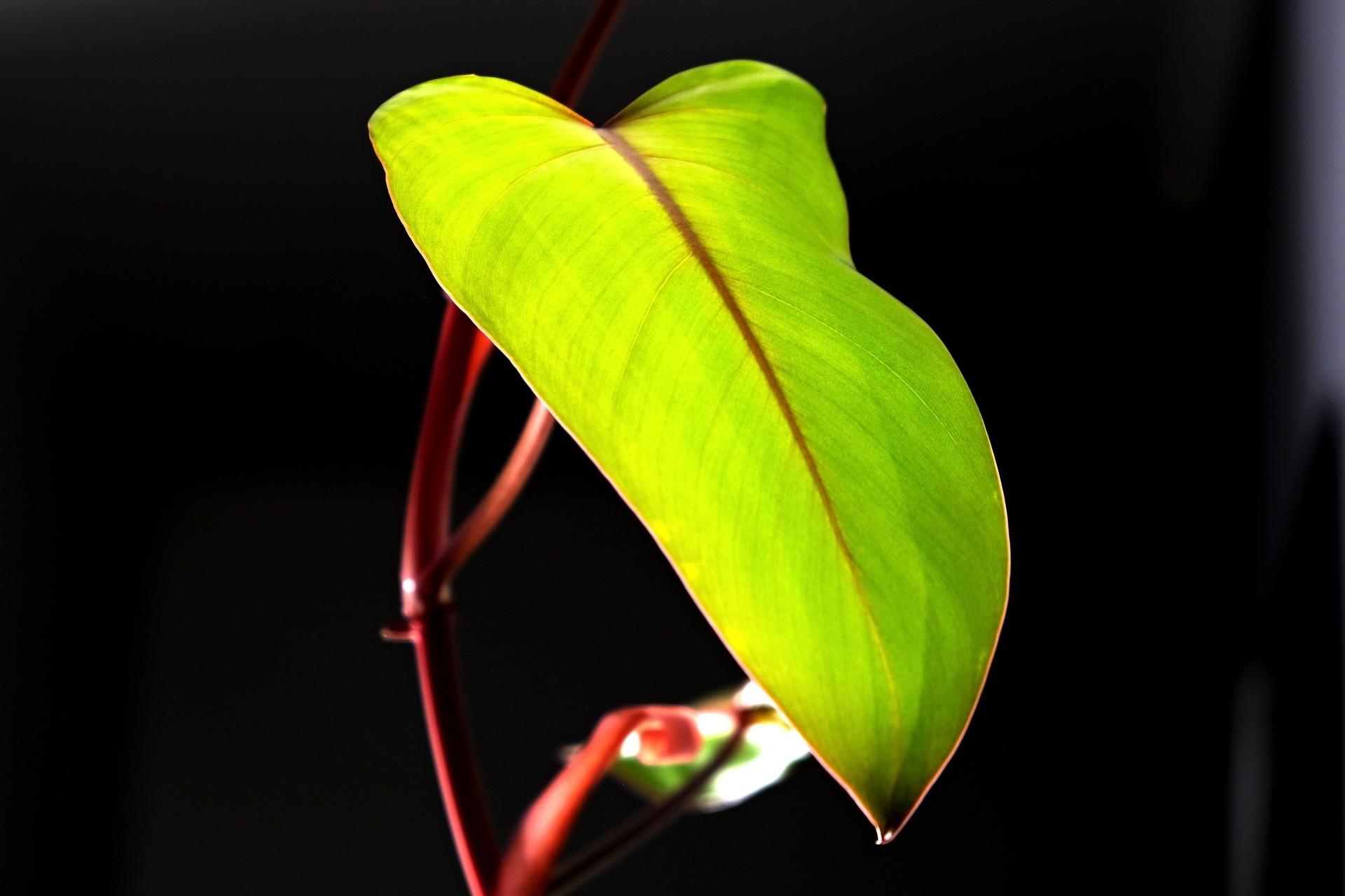 nawożenie kwiatów domowych, nawozy dla roślin domowych
