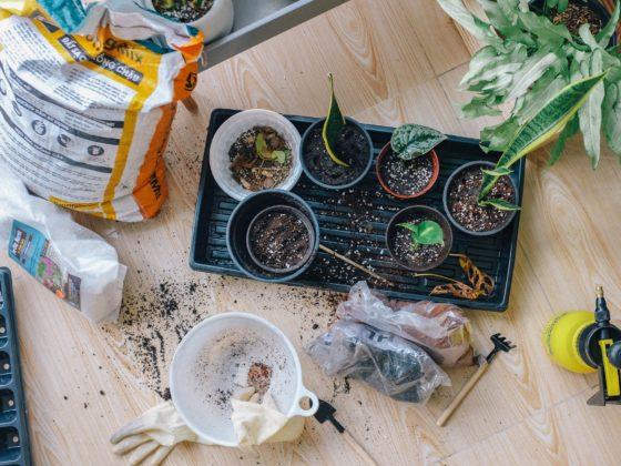 podłoże dla roślin doniczkowych