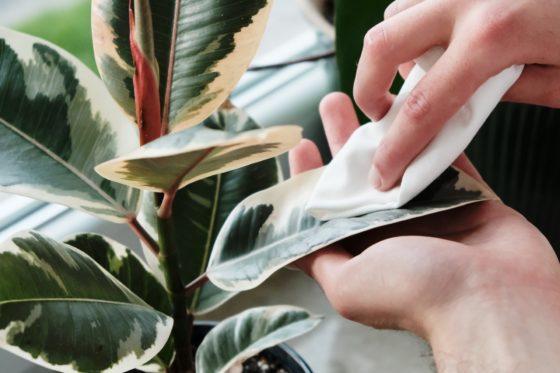 olej neem, olejek neem, biologiczna metoda na walkę ze szkodnikami