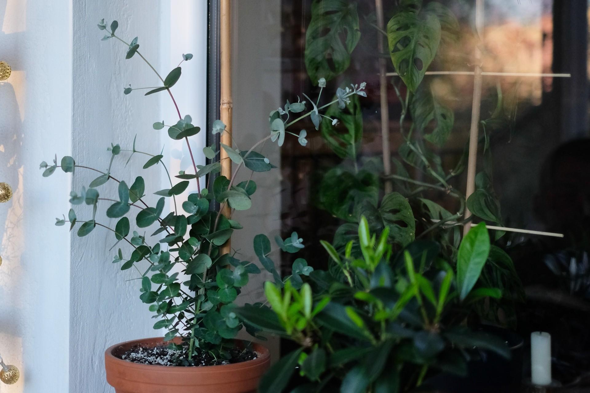 paliki dla roślin doniczkowych