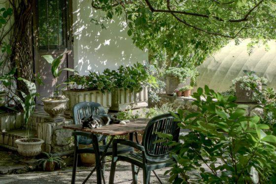 rośliny na balkon, taras i do ogrodu, rośliny domowe