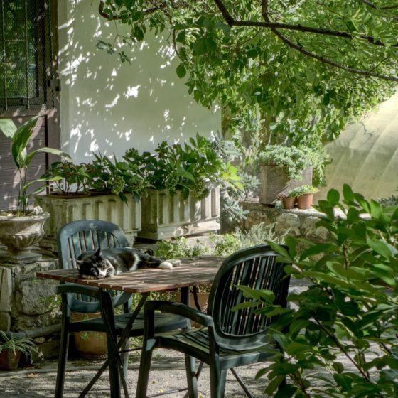 rośliny nabalkon, taras idoogrodu, rośliny domowe